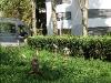 mh3_2011-09-10-007-fauconnier