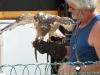 mh3_2011-09-10-015-fauconnier