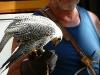 mh3_2011-09-10-034-fauconnier